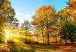 Seasons_Autumn_Trees_500706-672x372