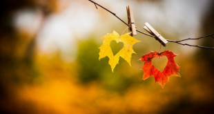 Autumn-leaves-awesome-love-wallpaper-672x372 (2)