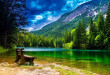 Wonderful-Mountain-landscape-with-green-pine-forest-green-turquoise-river-wallpaper-hd-672x372