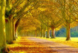 wallpaper2you_20833-672x372