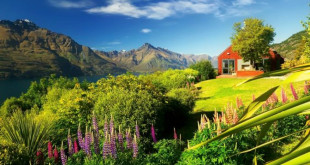 mountains-queenstown-new-zealand-grass-hotel-slope-mountain-sky-wildflowers-summer-lovely-beautiful-river-lupine-field-cool-images-desktop-images-background-1364x768-672x372 (2)