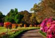 bellingrath-gardens-alabama-1612727-672x372 (1)