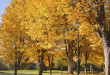 24932196-golden-colors-autumn-trees-in-a-park-oregon-672x372