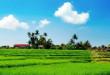 paddy-fields-laos-4191-672x320
