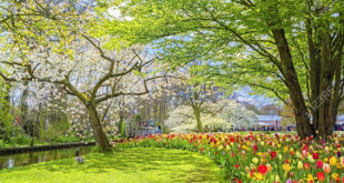 86169397-spring-blossom-nature-keukenhof-park-of-flowers-and-tulips-in-the-netherlands-beautiful-outdoor-scen-672x372